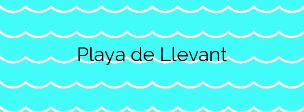 Información de la Playa de Llevant en Santa Susanna